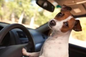 In auto con il cane: guai a lasciarlo solo! News